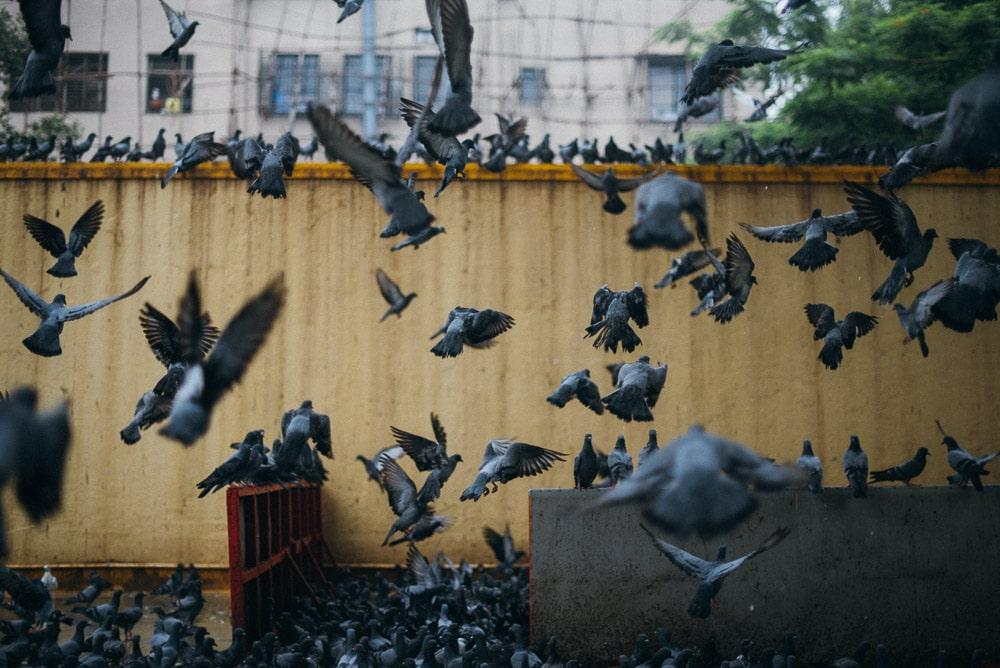 stilpirat_mumbai-19